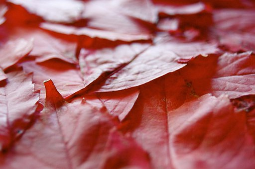 Leaf, Autumn, Red, Mourning, Death, Cemetery, Nature