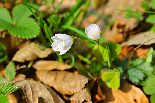 Forest, Forest Flower, Avar, Autumn, Season, Bloom