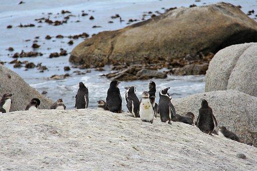 Penguins, Cute, Cuddly, Beautiful, Beach