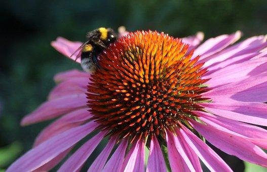 Bee On Flower, Pink Flower, 2 Coloured Flower
