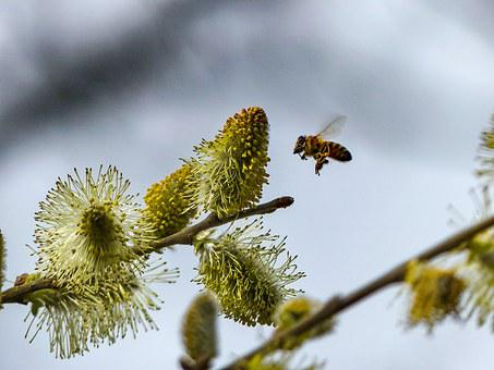 Bee, Spring, Blossom, Bloom, Pollination, Insect