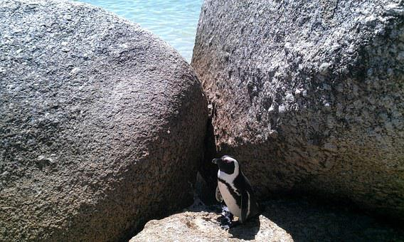 Bolders Beach, South Africa, Beach, Penguin, Cape Town