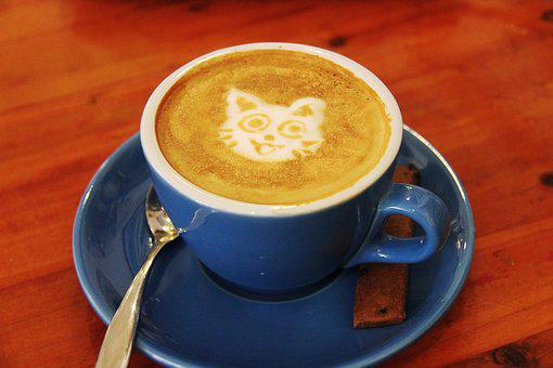 Coffee, Cafe, Cat, Milk, Drink, Hot, Flat White