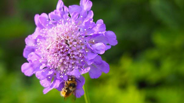 Purple Flower, Bee, Nature, Insect, Pollination