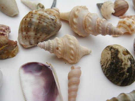 Mussels, Marine Gastropods, Meeresbewohner