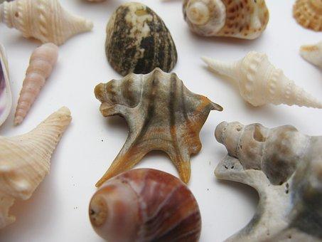Mussels, Marine Gastropods, Meeresbewohner, Macro