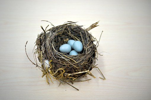 Nest, Bird, Robin, Thrush, Saving, Save For Later