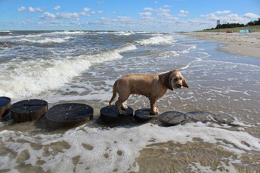Dog On Beach, Play, Fun, Joy, Movement, Summer, Sea