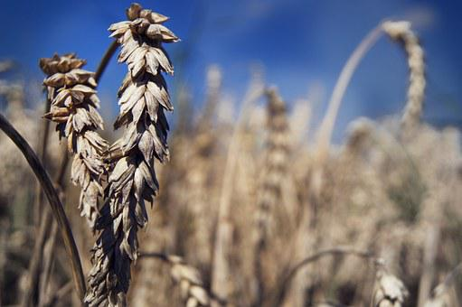 Summer, Field, Wheat, Bauer, Summer Day, Sun, Autumn