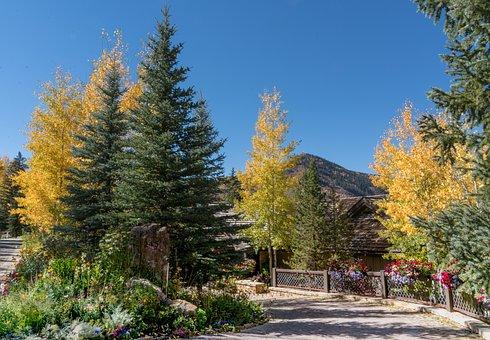 Vail, Colorado, Foliage, Nature, Garden, Flowers, Usa