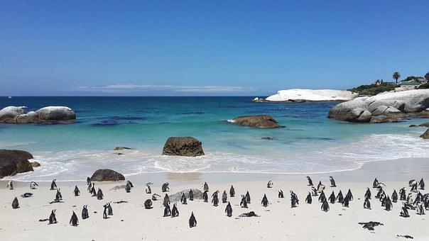 Penguins, Beach, Tropical, Sand, White, Water, Boulders