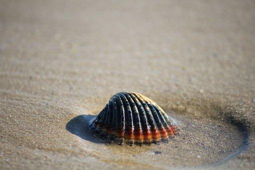 Shell, Sand, Sea, Shells, Summer, Bivalve, Background