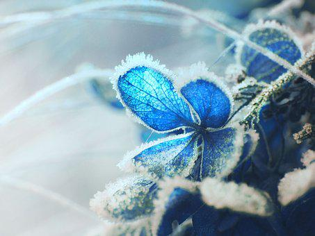 Garden, Hydrangea, Plant, Flower, The Petals, Nature