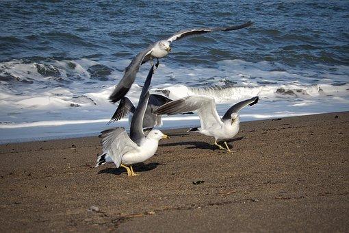 Animal, Sea, Beach, Seagull, Seabird, Wild Animal