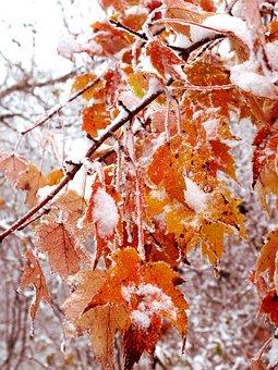 October, Winter, Strom, Captured, Fall