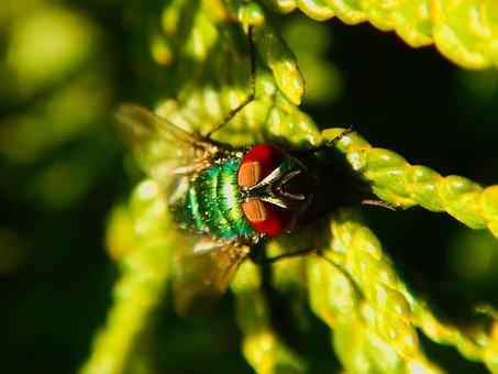 Fly, Macro, Green, Insect, Close, Nature, Leaf