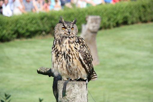 Birds, Eagle Owl, Bird Park Marlow