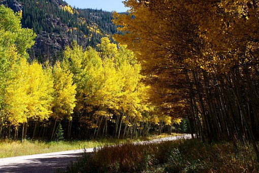 Colorado, Forest, Trees, Mountains, Nature, Outside