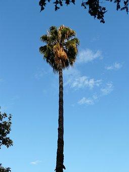 Palm, Tree, Log, High, Long, Sky