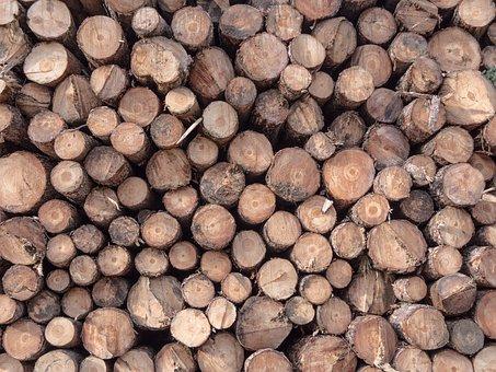 Wood, Trunk, Carpenter, Sawmill, Canada, Brown, Oak