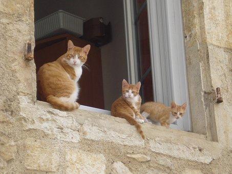 Cats, Animal, Pet, Kitten, Animals, Nature, Feline