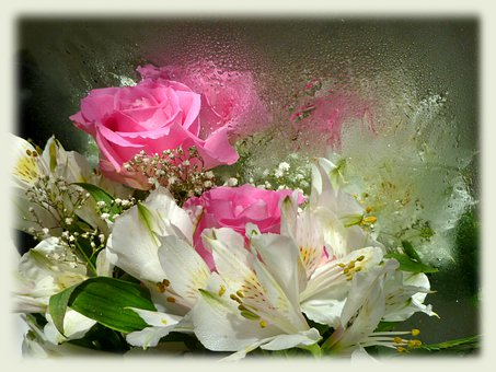 Pink Roses, Alstroemeria, Princess Lily, Reflections