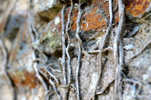 Roots, Nature, Wall