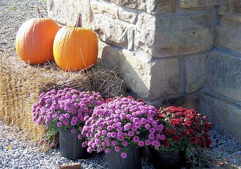 Nature, Seasons, Still, Life, Mums, Pumpkins, Straw