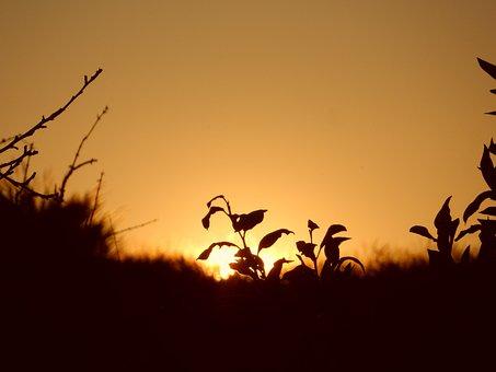 Sunset, Afternoon, Nature, Evening, Golden