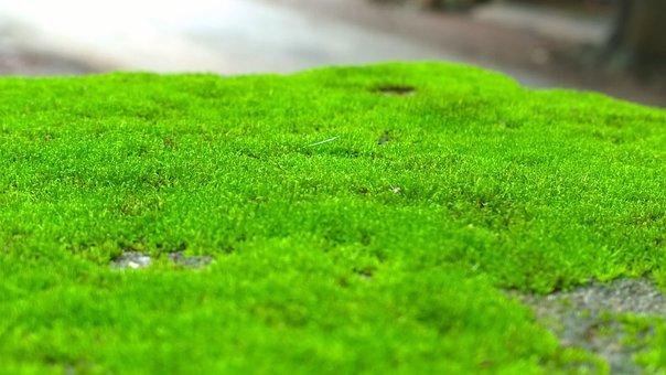 Moss, Greenery, Natural, Outdoor, Environment, Green