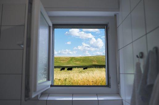 Window, Cows, Pasture, Fence, Field, Weeds, Farm, Sky