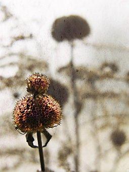 Garden, Flower, Overblown, Plant, A Garden Plant