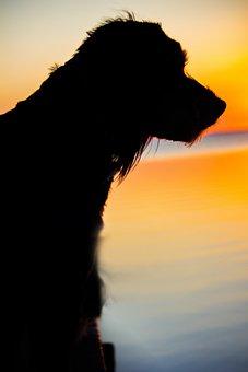 Dog, Sunset, Back Light, Evening Sky, Sea, Denmark