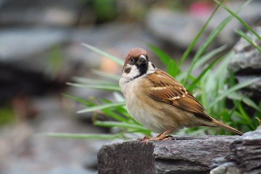 Palm, Feather, Bird, Stone, Sparrow, Beak, Eye, Coffee