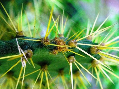 Cactus, Centong, Thorn, Green, Yellow, Plants