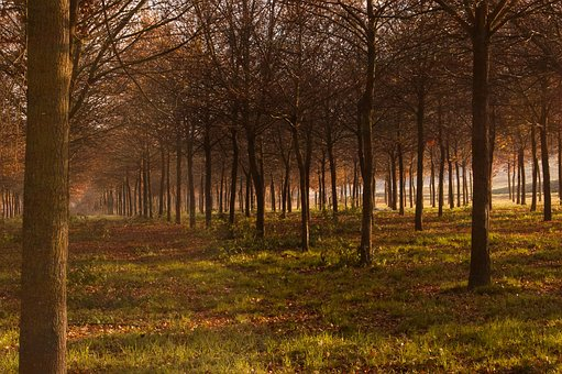 Autumn, Sibillini, Upstream, River, Yellow, Gold