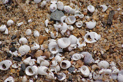 Beach, Shells, Sand, Clam, Summer, Ocean, Travel