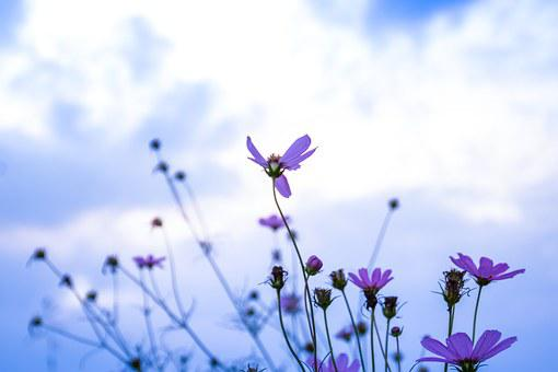 Plant, Flowers, Potpourri, Aroma, Fragrance