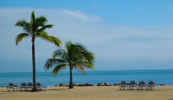 Beach, Florida, Sun Sand, Palm Tree, Beach Chair, Relax