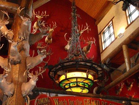 Taxidermy, Deer, Hunting, Head, Stag, Buck, Mammal