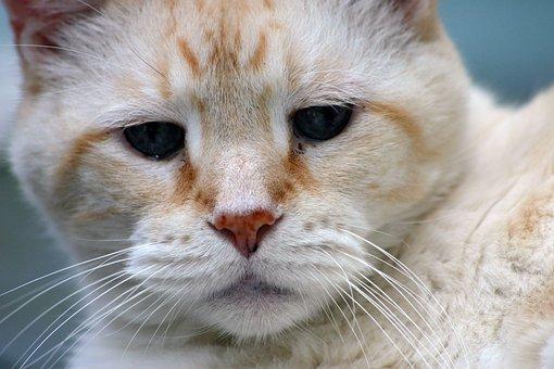 Cat, Domestic, Pet, Feline, Tabby, Rescue, Portrait