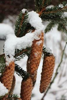 Snow, Winter, Pine Cones, Christmas Landscape, Needles