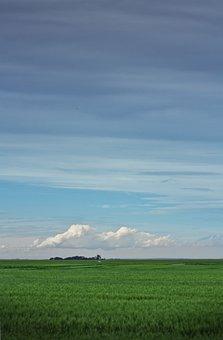 Field, Prairie, Farm, Open Field, Prairie Life