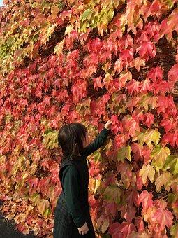 Autumn, Fall, Leaves, Red, Orange, Nature, Leaf, Golden
