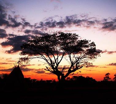Tree, Black, Hope, Outdoor, Open Air, Wallpaper