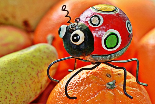 Beetle, Animal, Insect, Deco, Fruit, Fruits, Delicious