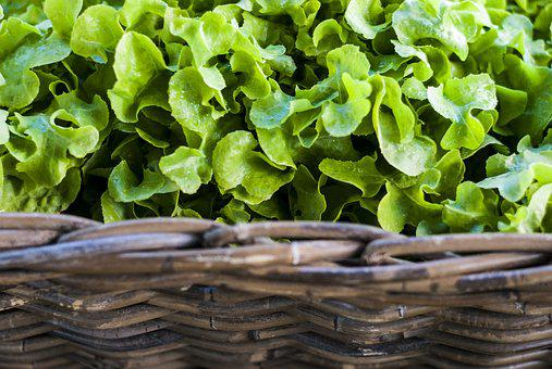 Vegetable, Market, Supermarket, Fresh, Healthy, Fair