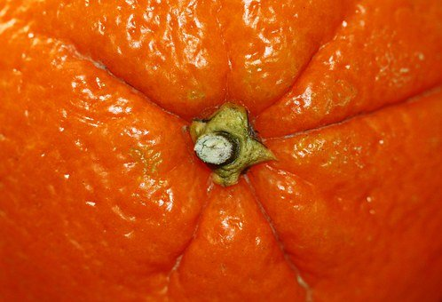 Orange, Fruit, Citrus Fruit, Stalk, Healthy