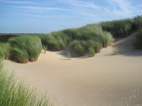 Netherlands, Marram Grass, Plants, Sky, Clouds, Beach