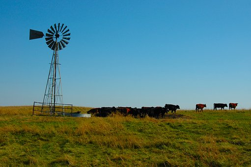 Cattle, Prairie, Wind, Landscape, Meadow, Green, Animal